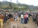 The early morning Octavalo Animal Markets